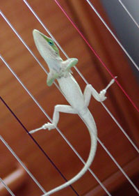 Lizard watches the conductor
